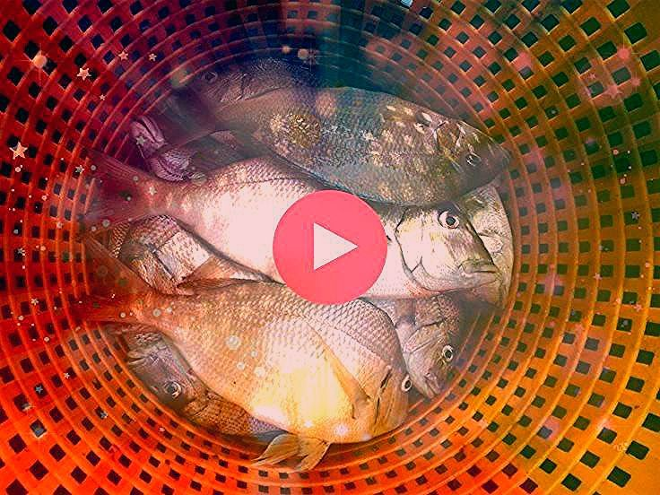 Porgy Fish Recipes The Porgy Boat Chamber A Chartered Fishing Primer  MiMis Fish Food Enter The Porgy Boat Chamber A Chartered Fishing Primer  MiMis Fish Food  Cooking Co...