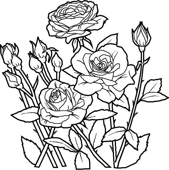 Pin By Mama Sweet Pea On Flowers And Plants Rose Coloring Pages Flower Coloring Sheets Flower Coloring Pages