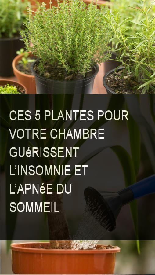 Ces 5 Plantes Pour Votre Chambre Guérissent Lu0027insomnie Et Lu0027apnée Du  Sommeil #Sommeil #Plante #Plantes #Chambre #Apneedusommeil #Apnee #Insomnie