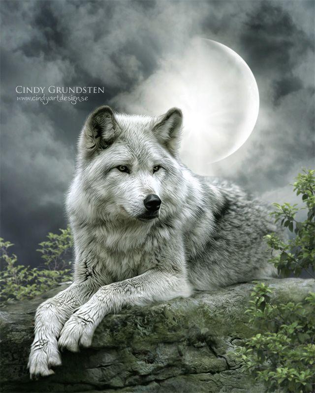 Wolf White Enchanted Fantasy Digital Art Of Cindy Grundsten