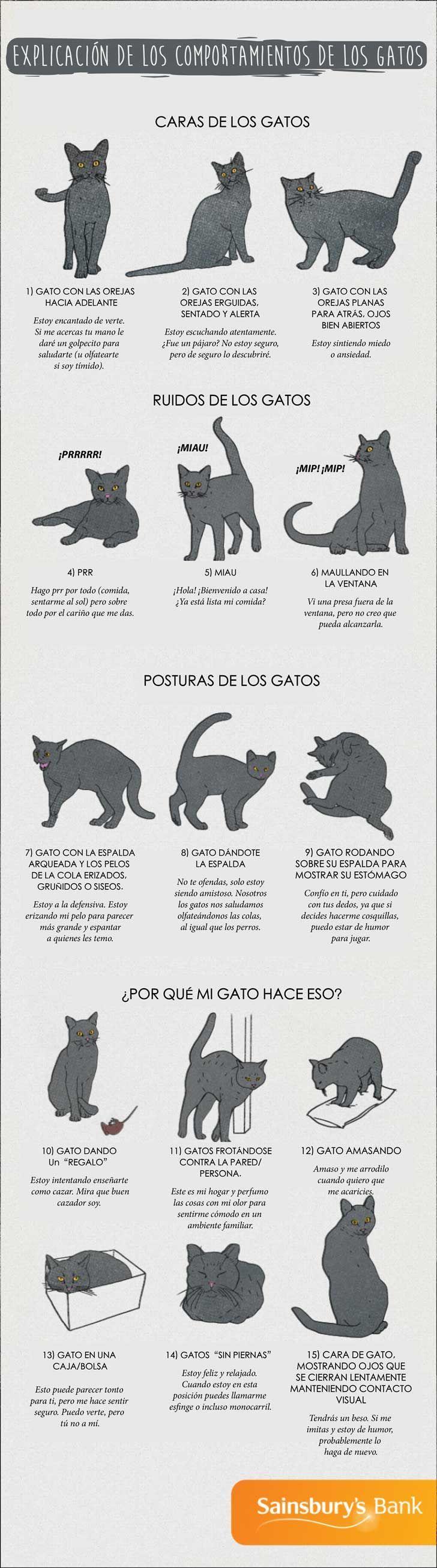 Por fin podrás comprender lo que tu gato está tratando de decirte ...