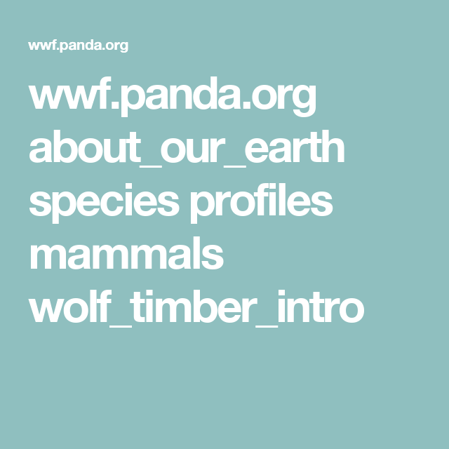 wwf.panda.org about_our_earth species profiles mammals wolf_timber_intro