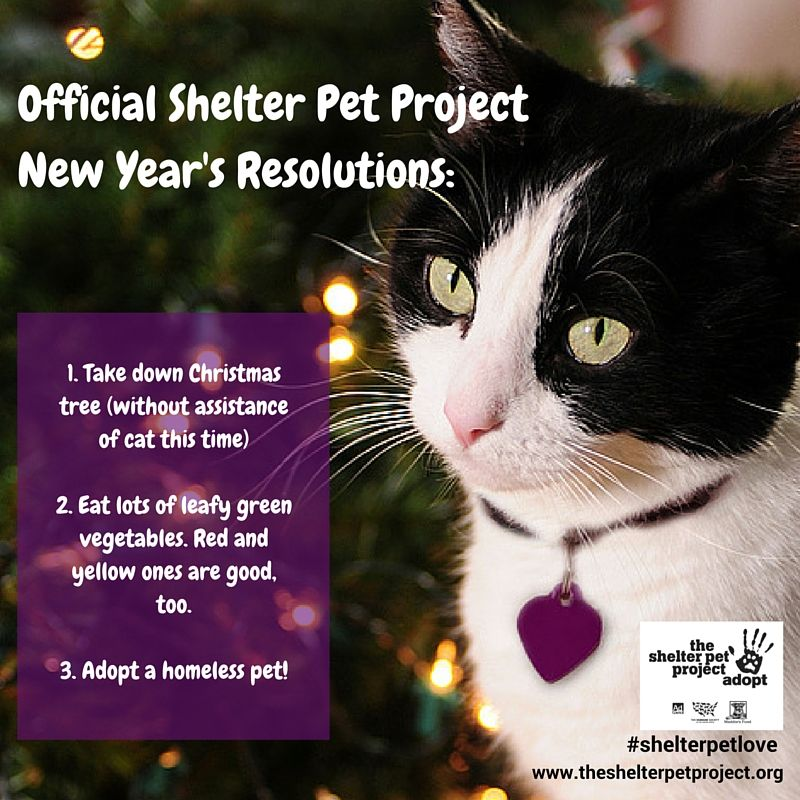 Happy New Year Resolve To Adopt The Rest Will Take Care Of Itself The Shelter Pet Project Animal Shelter Donations Pets