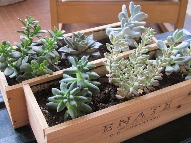 Macetero con caja de vino dys con pales y cajas de madera for Casas decoradas con plantas naturales