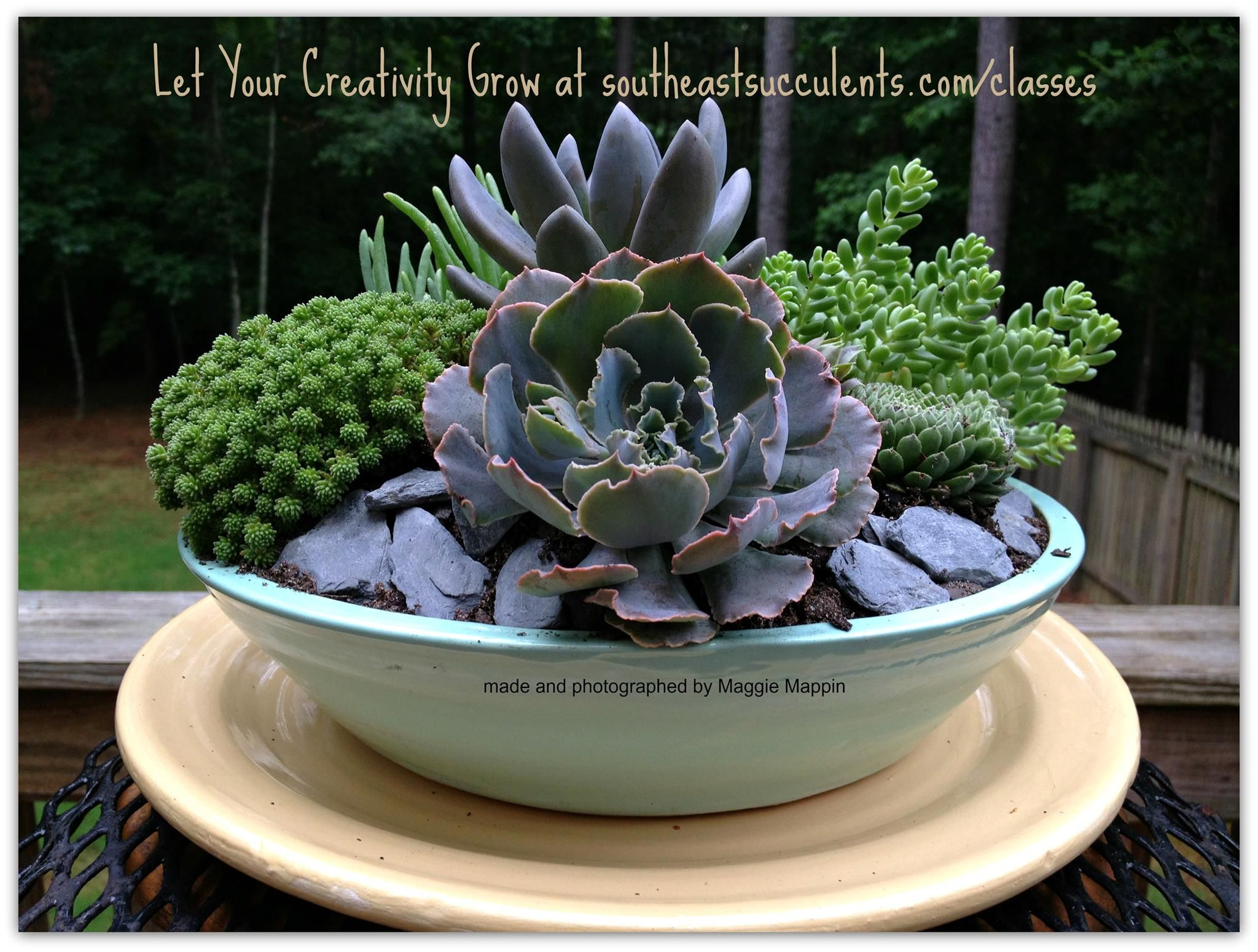 A Radiant Succulent Dish Garden Enjoying Its New Home And