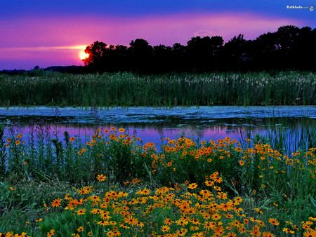 TRANQUIL MARSH WITH FLOWERS