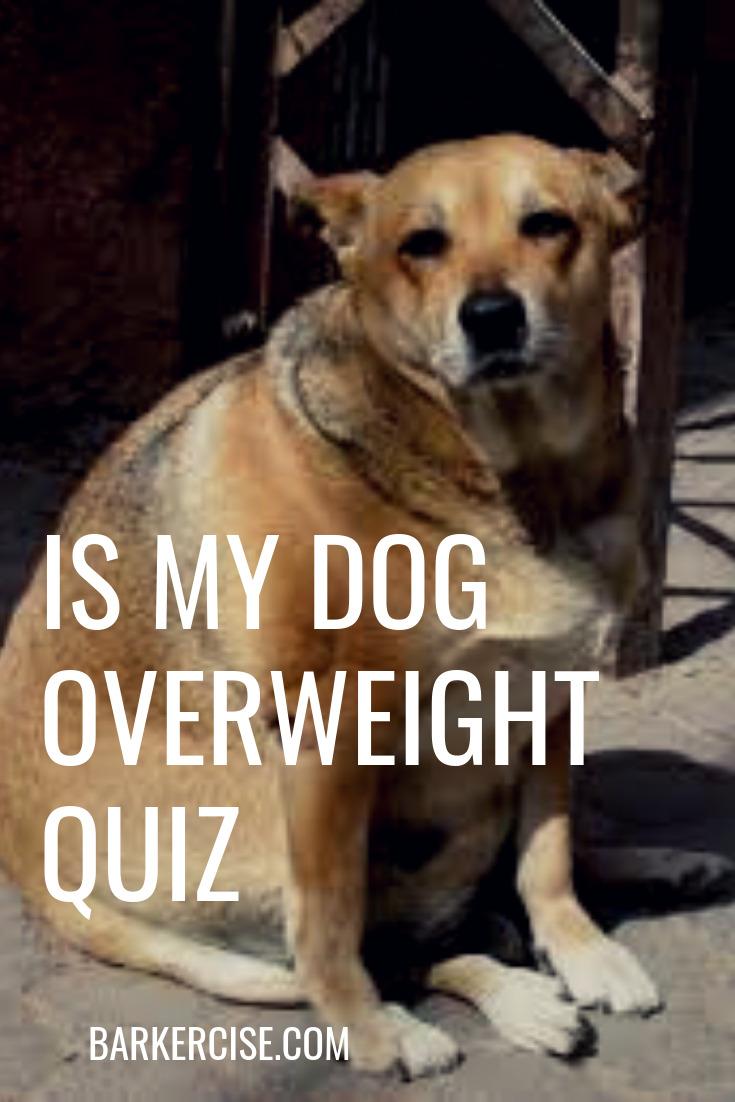 Is my dog over weight quiz. Check your dog's body