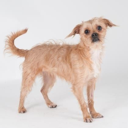 Doozie is a sweet little girl who is available for adoption at our Pacific Heights campus!