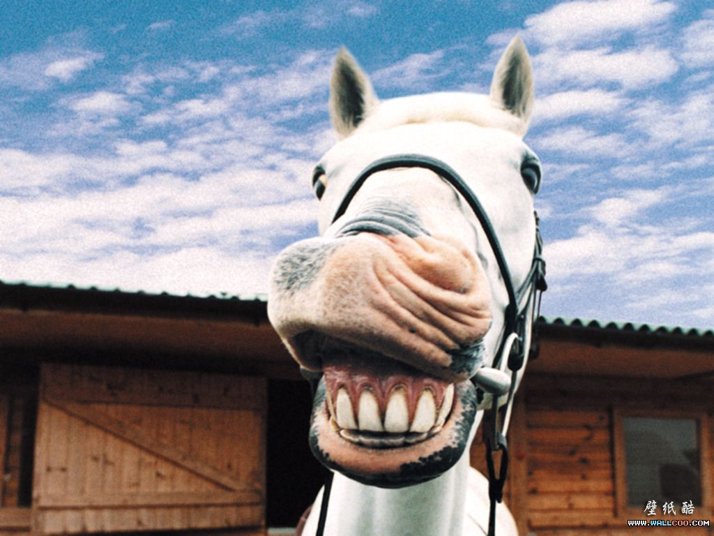 73e4a14c6bfe3d59b2d1cc410292229e horse teeth cracking me up pinterest teeth, horse and funny animal