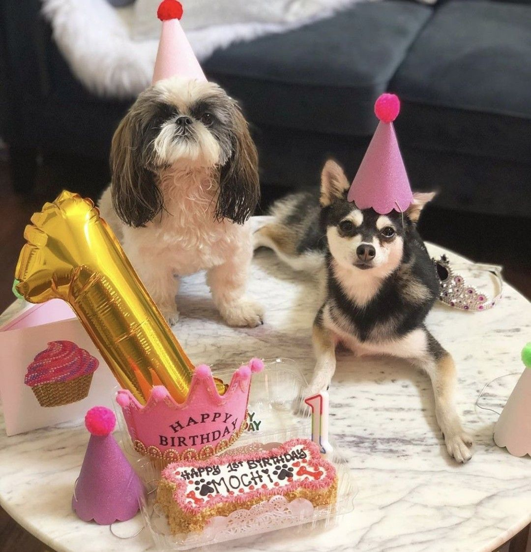 Today my beautiful niece @mochi_kleekai turns 1🎂🎈!We got to celebrate together!🎂💥  📸@beachdoggylilly . . . . . .  #1stbirthday #kleekai #dogbirthday #cutedogs#birthdayparty #doodlesofinstagram #minigoldendoodle #poodlepup #goldenretrieverpup #goldendoodle #doodles #puppiesofinstagram #goldendoodlelove #puppies #newpuppy #newpuppysmell #puppylove🐶 #dogsofinstagram #bestdogever #goldendoodlelife #goldendoodlesofinsta #doodlesofinsta #familydog #goldendoodlepuppy #doodlelove #doodle