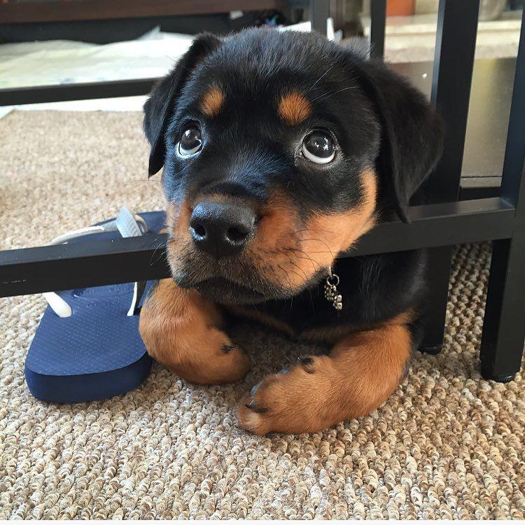 "awwww-cute: "" Chew your flip flop… who me?! (Source: http://ift.tt/1WKux4c) """