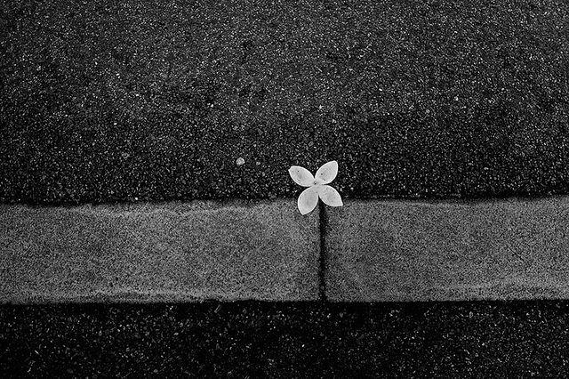 Flower Power | Flickr - Photo Sharing!  © Pavel Radu