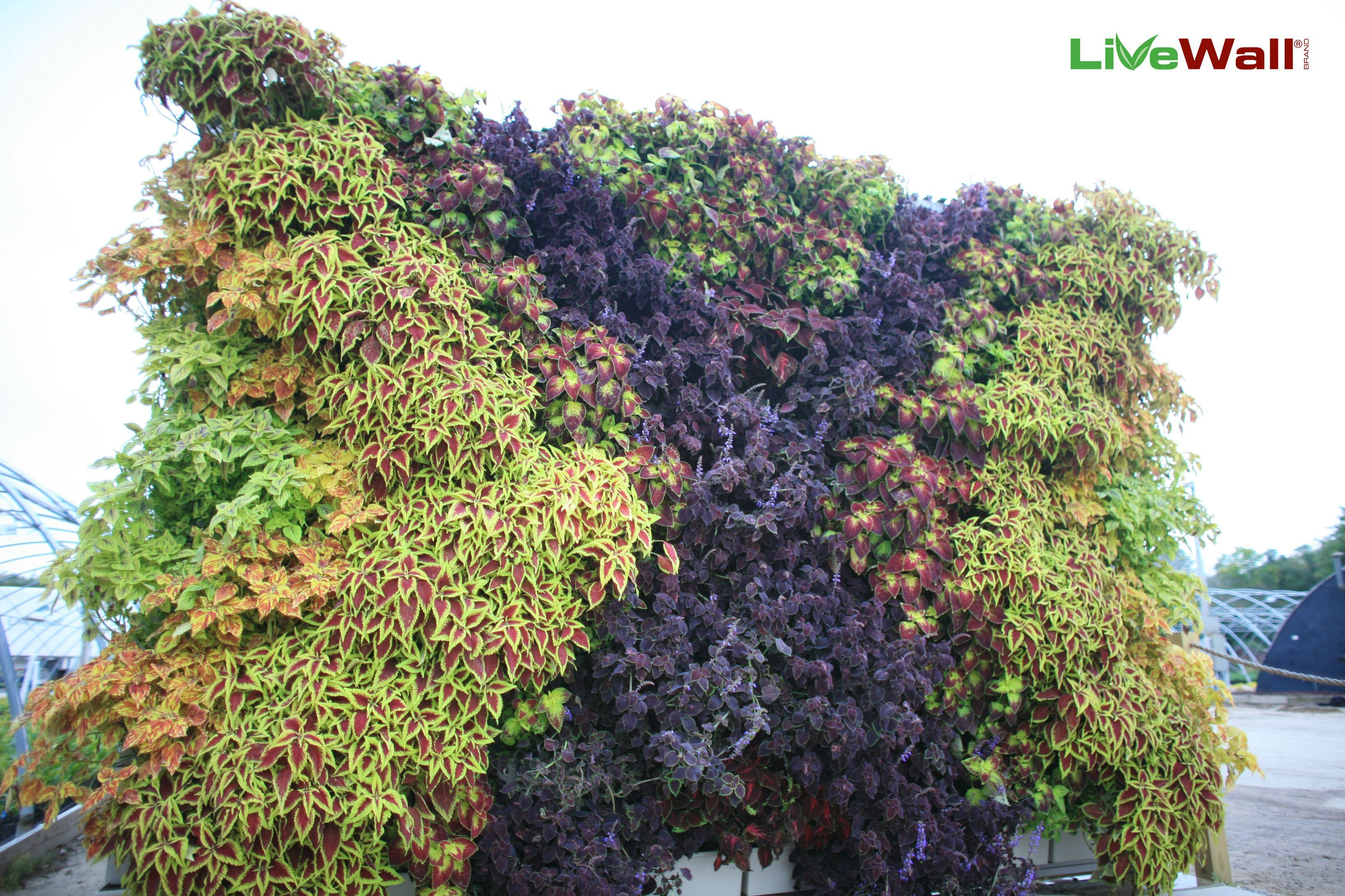 X marks the spot with this living art design living walls