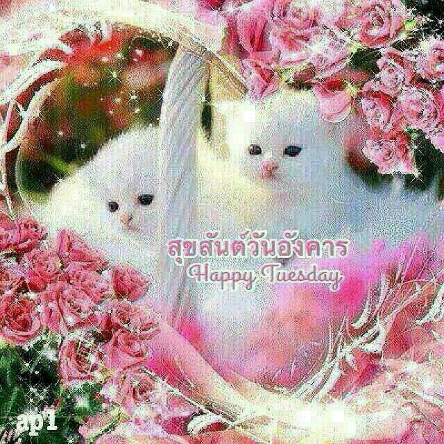 ♥ ♥ ลูกแมว, แมว, แมวน้อย