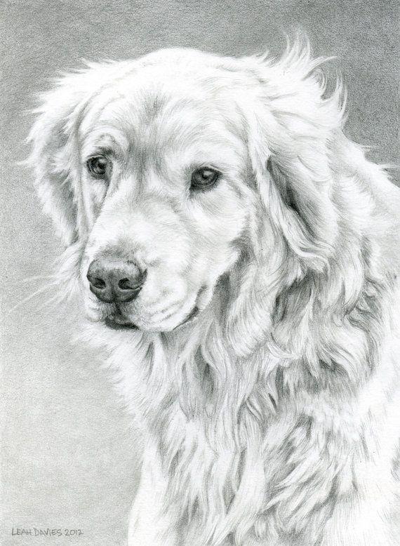 Milo Artist Leah Davis Golden Retriever Drawing Pet Portraits