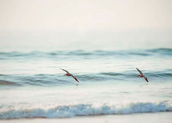 Soft Blue Ocean Photograph Beach Decor Pelicans Sea Waves