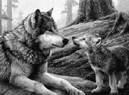 Resultado De Imagen Para Bosque Dibujo A Lapiz Faciles Lobo Alfa Dibujos Dibujos Hermosos