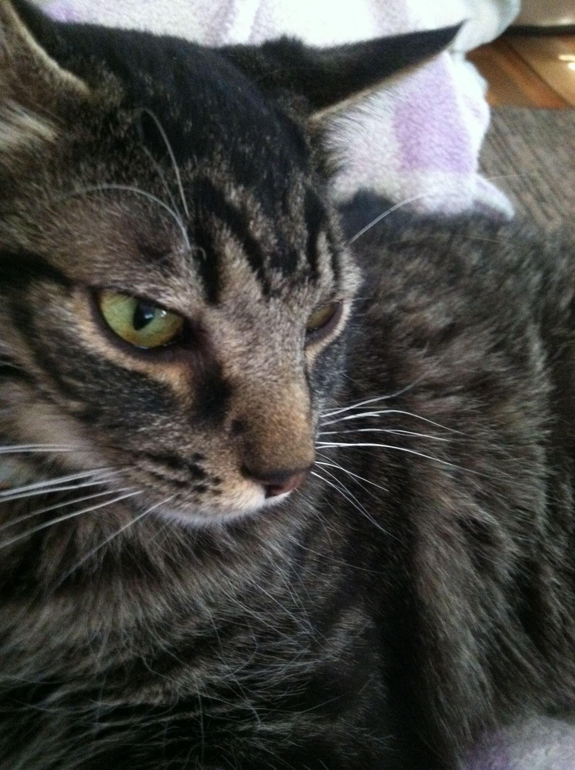 Pin by Lynn HarringtonGraham on Pets Pets, Animals, Cats