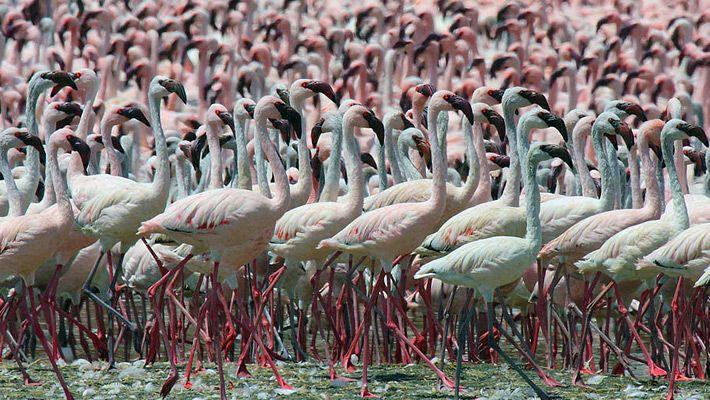 Lacul #Bogoria (Kenya)  Frumusetea Africii in 20 de poze deosebite (partea 1) - galerie foto.  Vezi mai multe poze pe www.ghiduri-turistice.info  Sursa : www.wikipedia.org