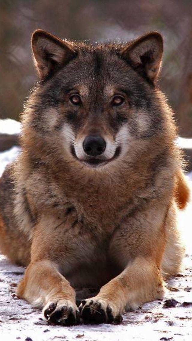 Rúben Sequeira O Lobo