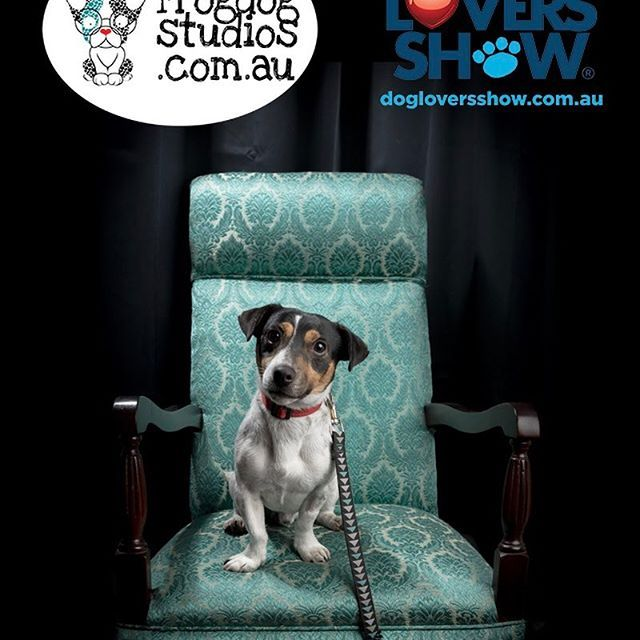 Day 2 Melbourne Thedogloversshow With Benji From Theinbetweenersanimalrescue Dogloversshowmelbourne Dogloversshow Dogs Animal Photography Animal Rescue