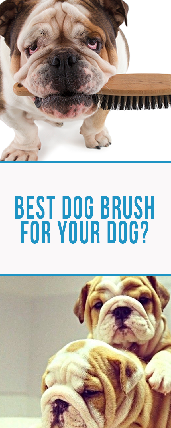 Best Dog Brush for Your Dog? Here Are Our Top 5 Picks