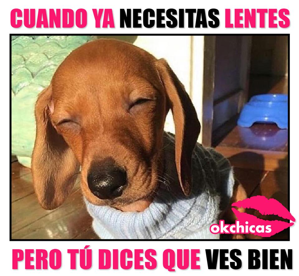 20 Divertidos Memes De Perros Que Te Haran Llorar De Risa Memes Perros Perros Salcichas Imagenes De Perros