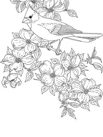 Cardenal y Cornejo, Ave y Flor del Estado de Virginia Dibujo para ...