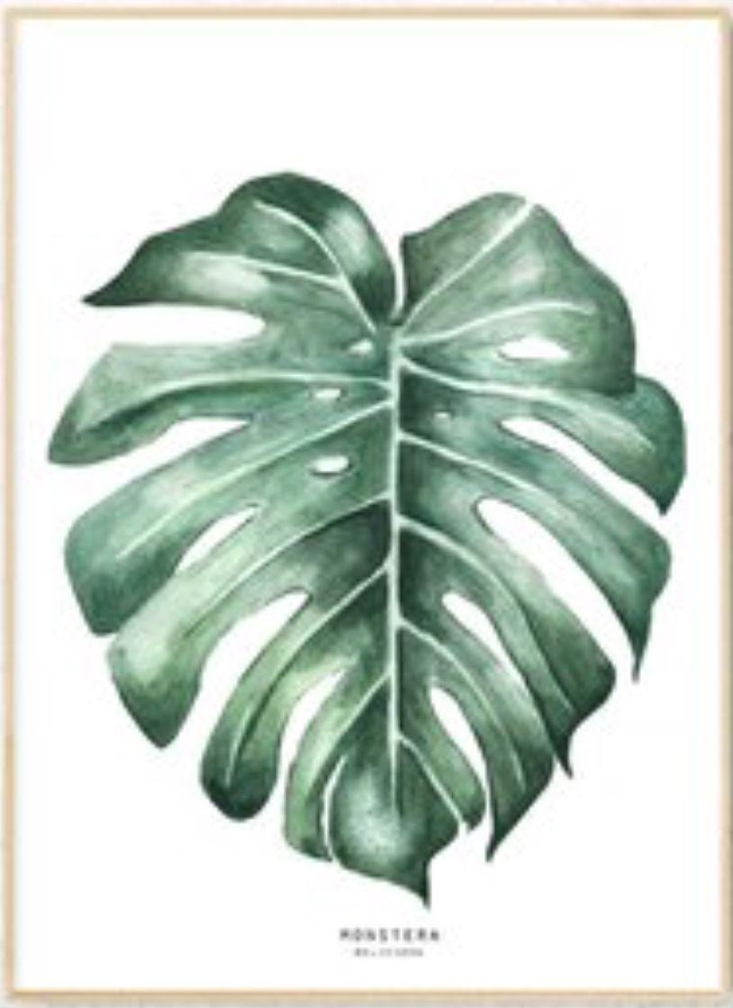 711377ae30b8 Monstera watercolor leaf