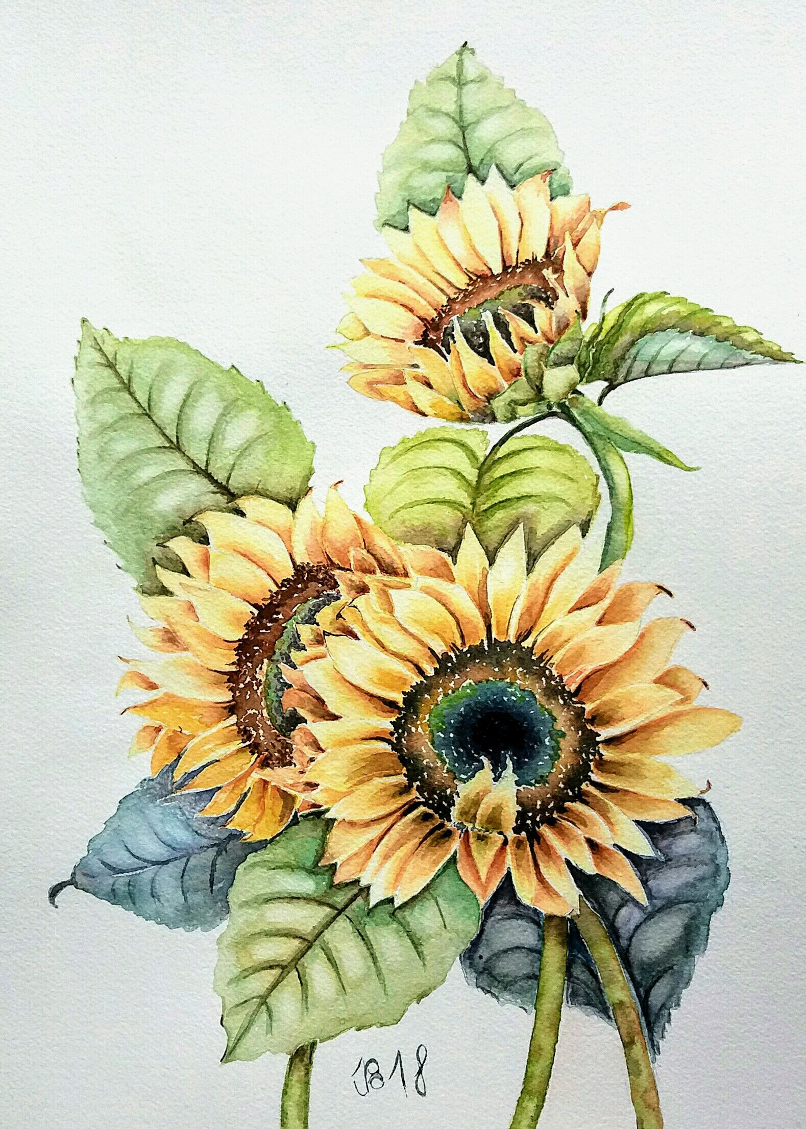 Aquarell Sonnenblumen Watercolor Sunflowers Aquarell