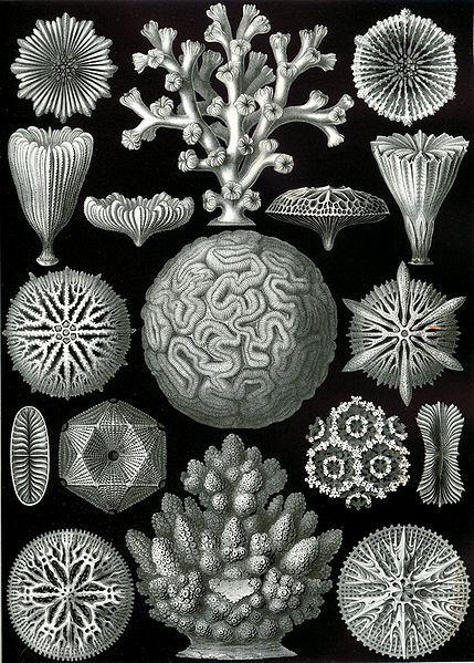 Fauna illustrations by Ernst Haeckel