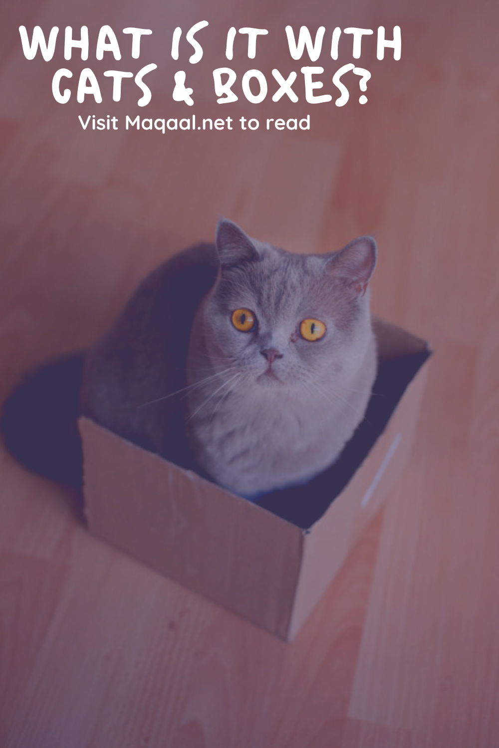 What Is It With Cats And Boxes In 2020 Cats Cat Sleeping Cat Behavior