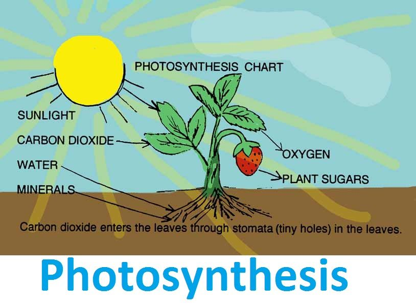 free ngss science lessons for photosynthesis from next gen lesson rh pinterest com