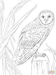 image result for printable owl drawings  owl pictures to color owl coloring pages owls drawing