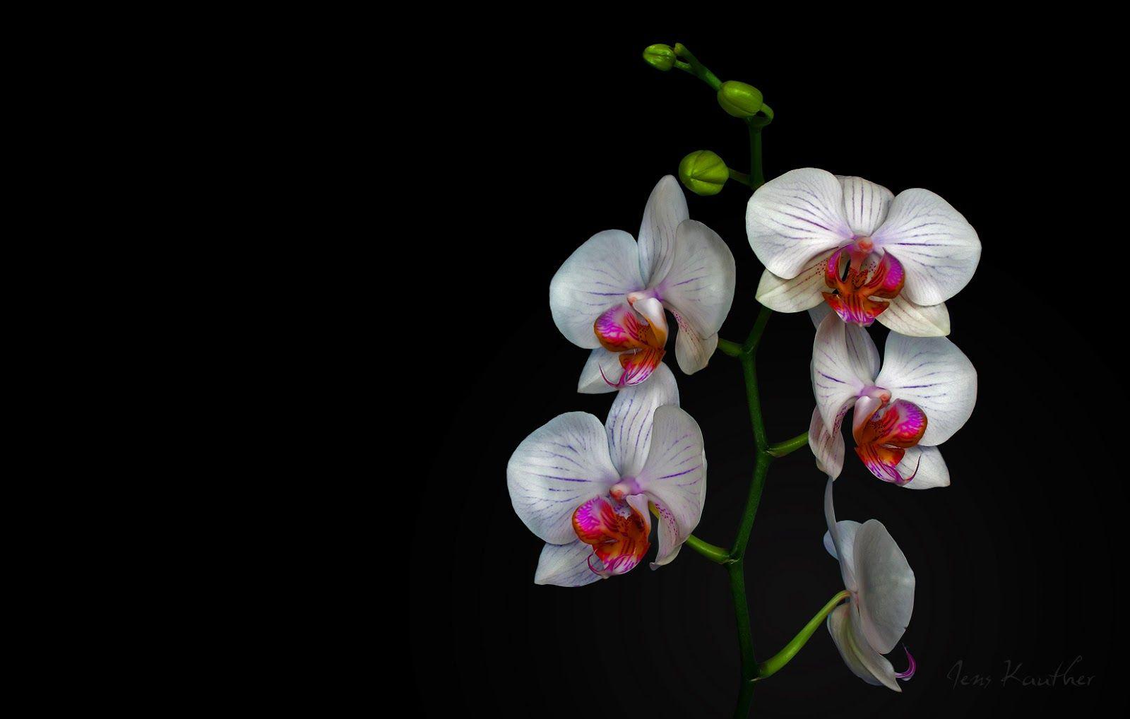 Orquideas Fondo De Pantalla De Planta Exotica De Gran Belleza
