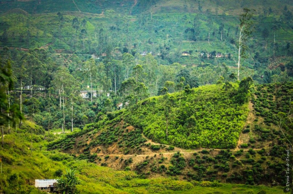 10 Photos That Will Make You Want To Travel To Sri Lanka Travel Photo National Parks