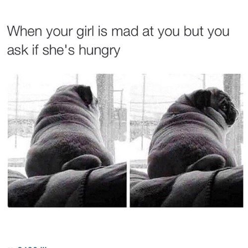 Will Pizza Fix This Problem Funny Pictures Just For Laughs Pugs