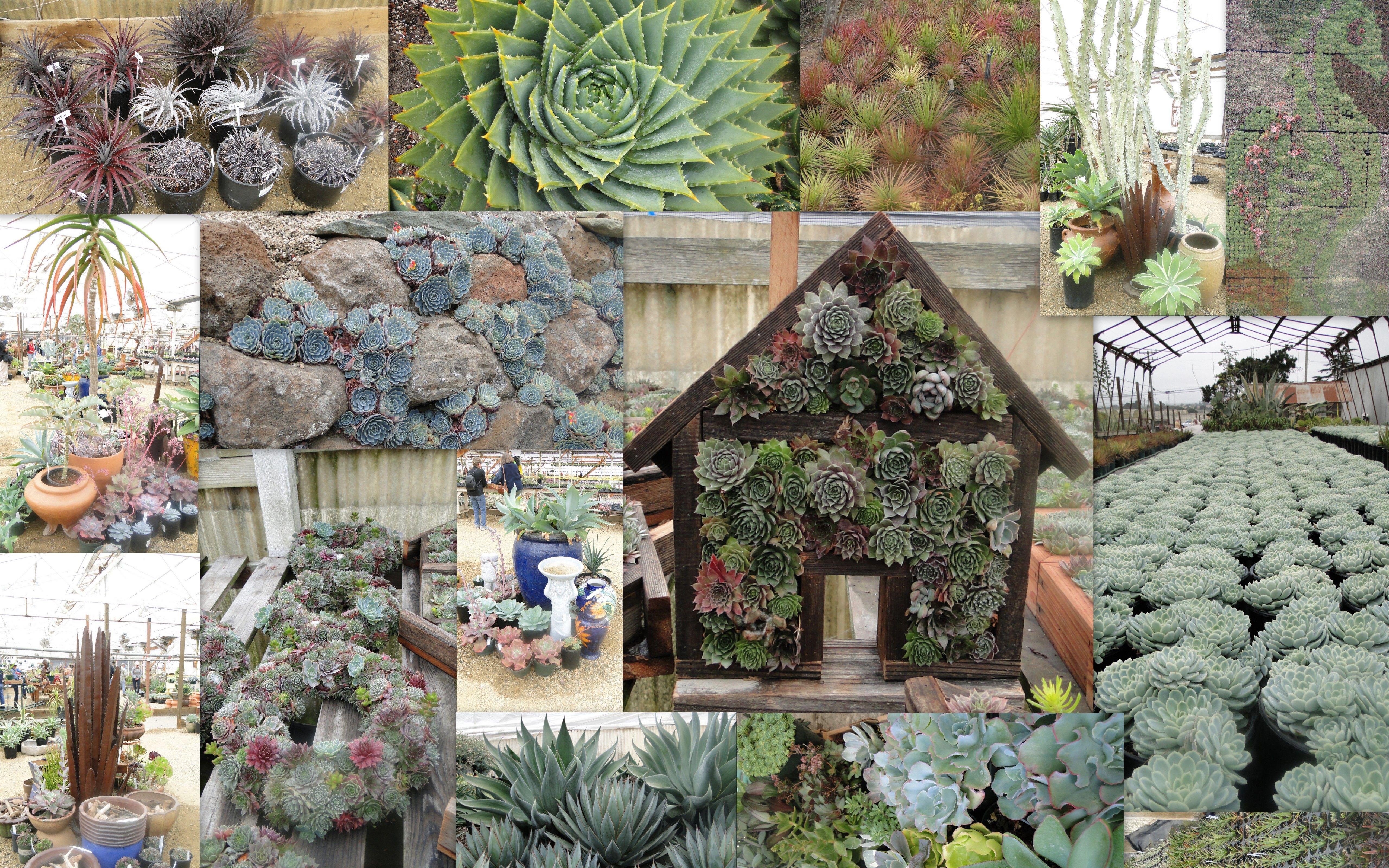 succulent gardens - Google Search