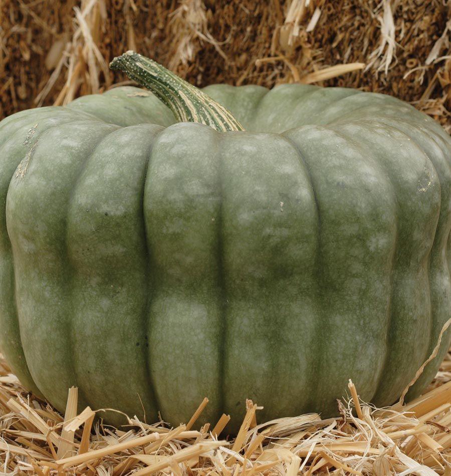 queensland blue organic vegetables and vegetable garden