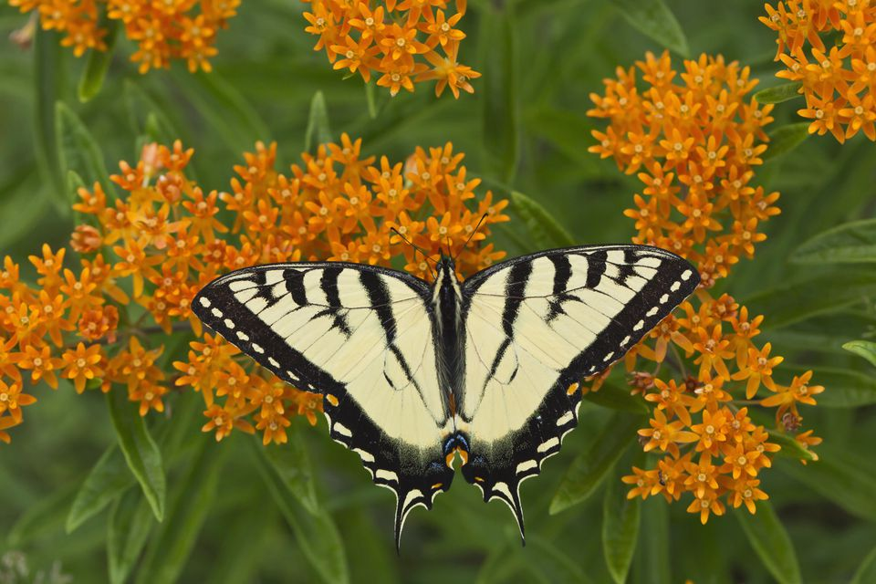 How to Design a Garden That Will Attract Butterflies and ...