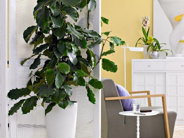 grnpflanzen im zimmer so werden sie in szene gesetzt wohnzimmer pflanzenwirhaus - Wohnzimmer Pflanzen Schattig