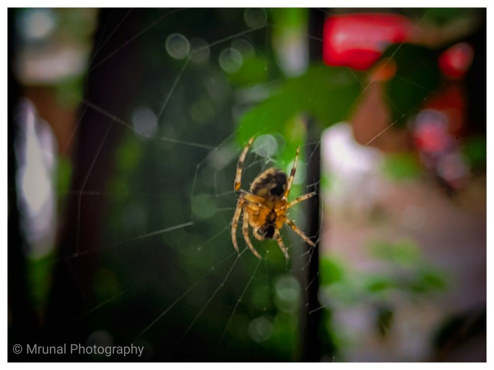 How dedicatly spider makes his web and become a king of his own home. So we should learn from him to try again and again and never loose hope then you will definitely reach to your success. 🕷️🕸️ . . #spider #spiders #spiderweb #spidersofinstagram #naturephotography #mobilephotography #mobileclick #nature_perfection #naturebeauty😍 #naturemessages #yourshotphotographer #natgeoyourshot #natgeo