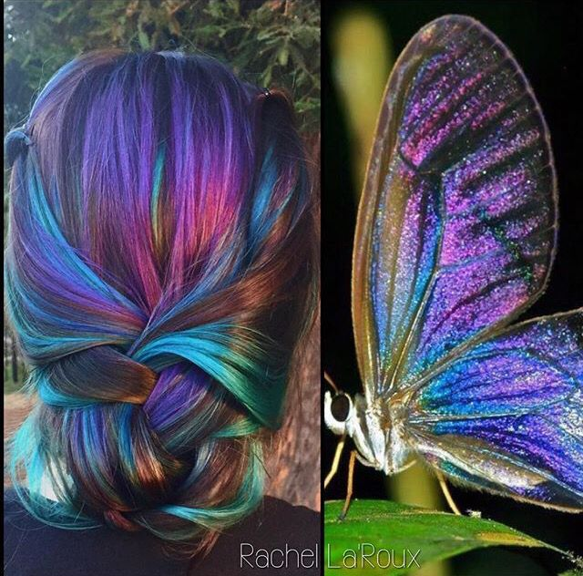 Butterfly color.