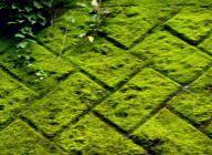 壁面への苔の定着 - 特講 苔園芸 モス・プラン