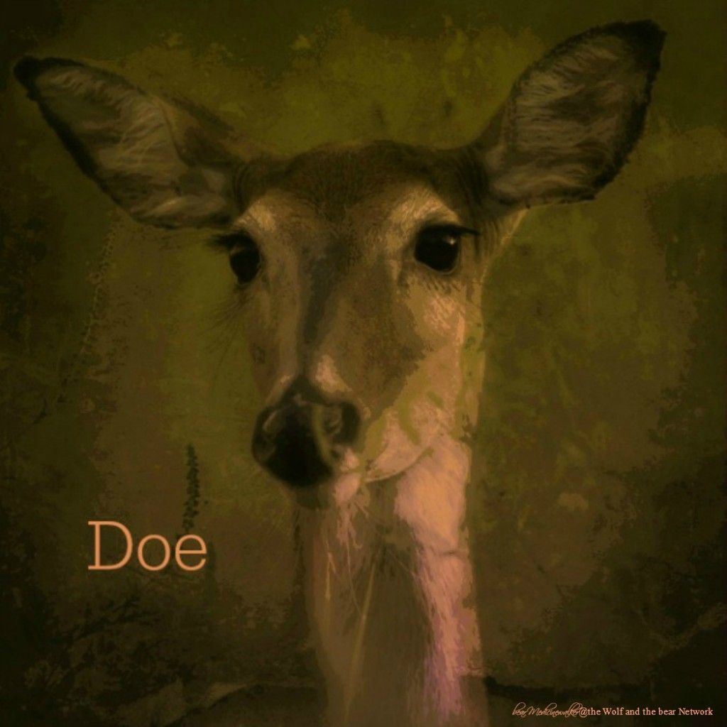 December 7, 2015 Totem Card of the Day - Doe :http://bearmedicinewalker.com/2015/12/07/december-7-2015-totem-card-of-the-day-doe/