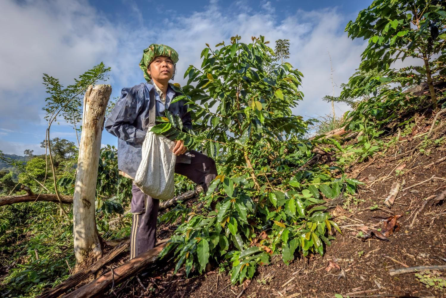 Future demand and climate change could make coffee a driver of deforestation