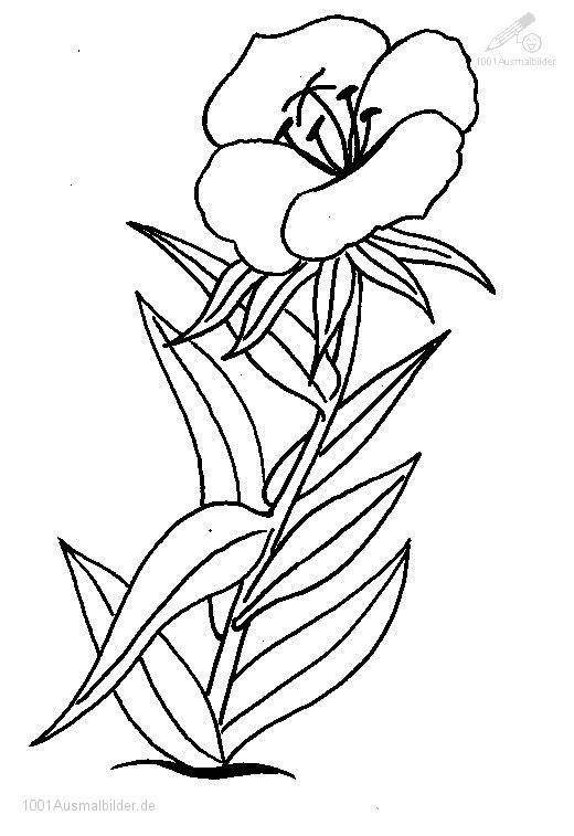 Blumen Malvorlage | flower coloring | Pinterest | Blumenmalvorlagen ...