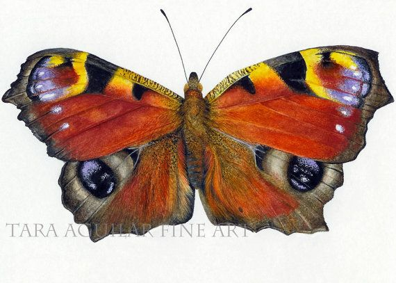 Fluttering by Christine Tarski on Etsy