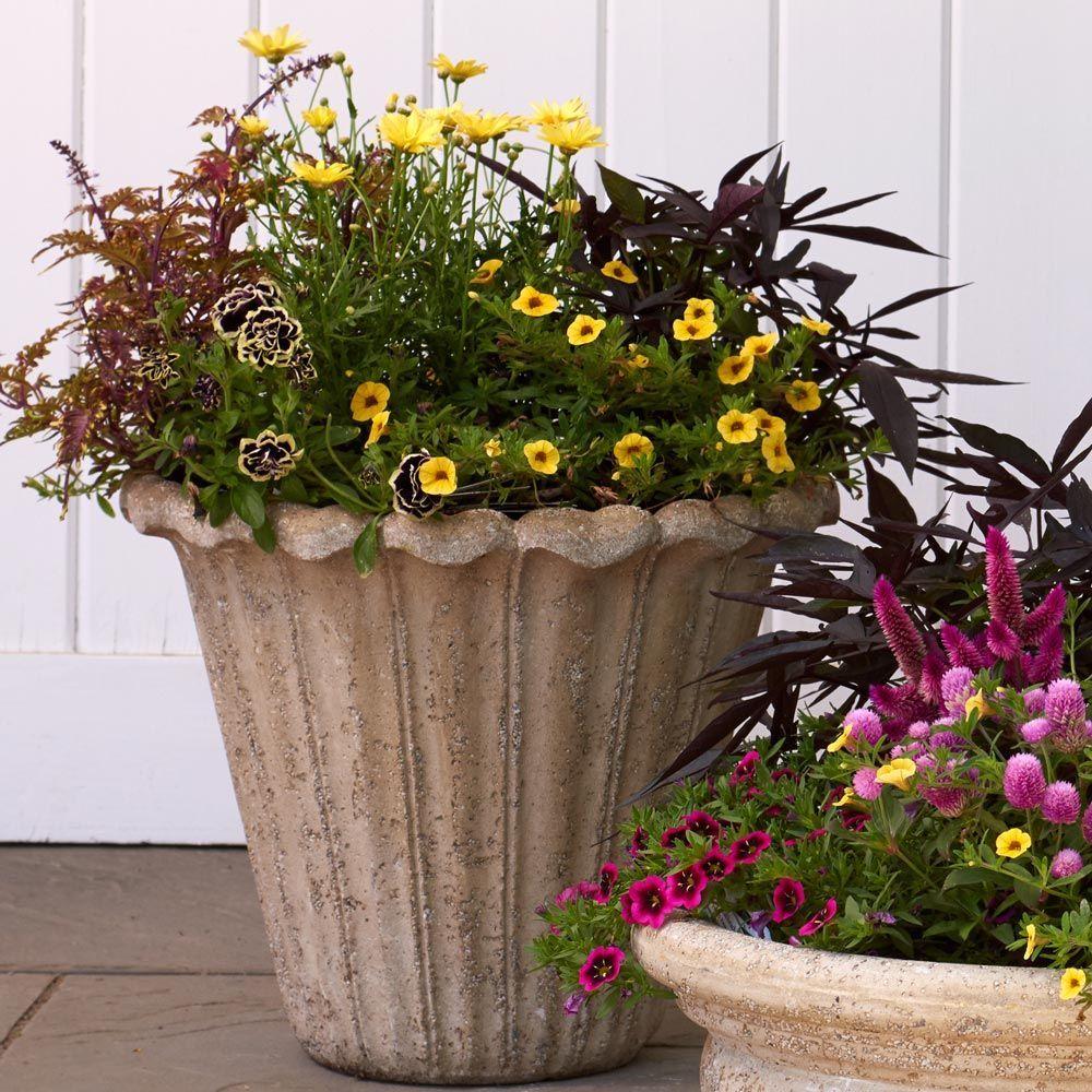 Avignon Flower Pot in 2020 Flower pots, Unique planter