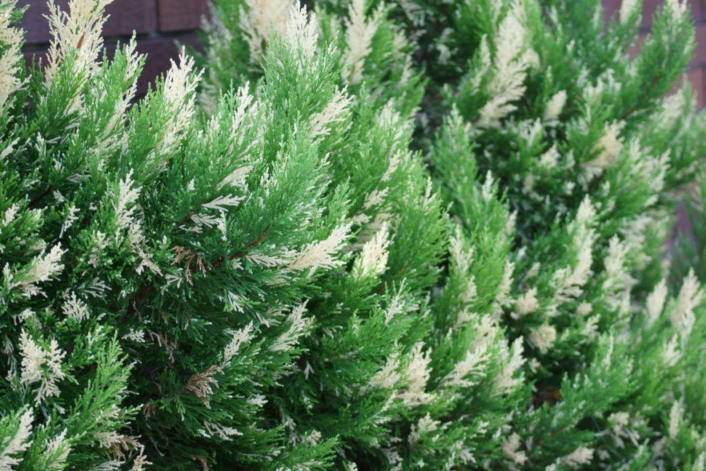 植木屋が教える 洋風の家におすすめ の庭木30選 2020